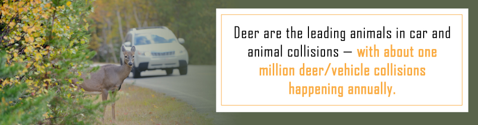 stats car collisions with deer